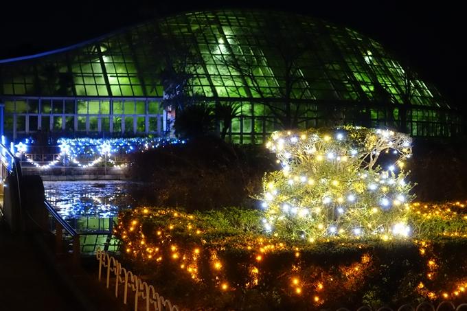 京都府立植物園_イルミネーション No14