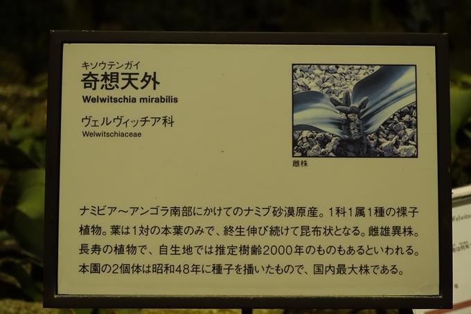京都府立植物園_イルミネーション No27
