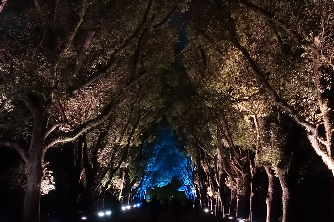 京都府立植物園_イルミネーション No49
