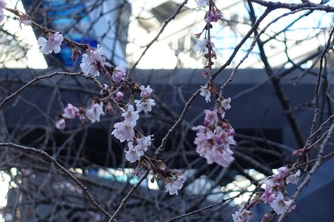 御池桜 No4