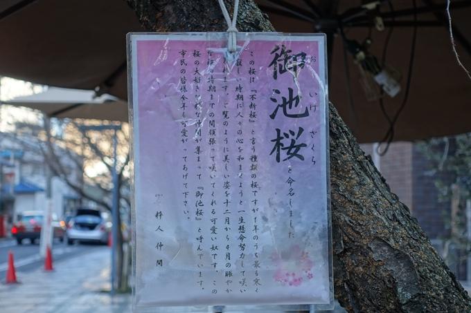 御池桜 No6