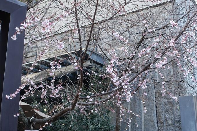 御池桜 No3