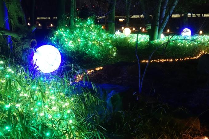 梅小路公園 ライトアップ2018 No21