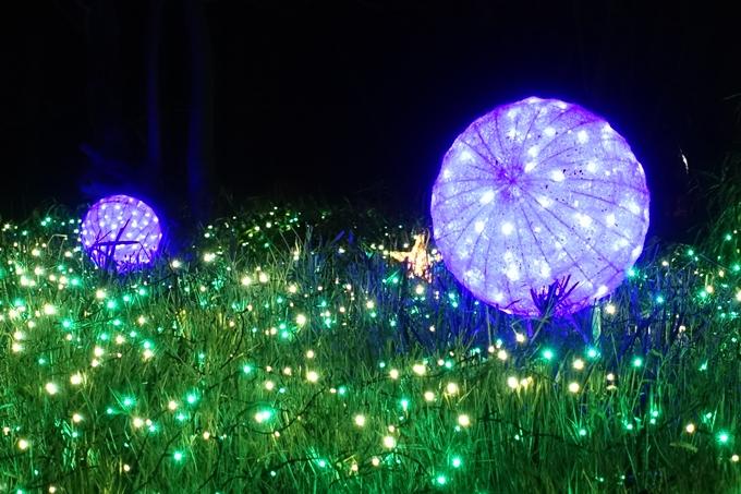 梅小路公園 ライトアップ2018 No24