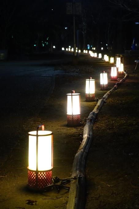 梅小路公園 ライトアップ2018 No31