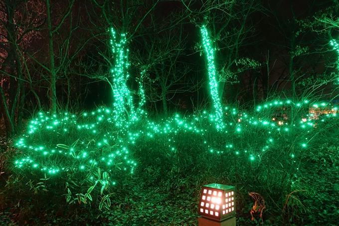 梅小路公園 ライトアップ2018 No35