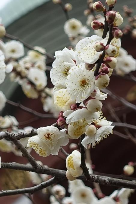 北野天満宮 梅花祭2018 No27