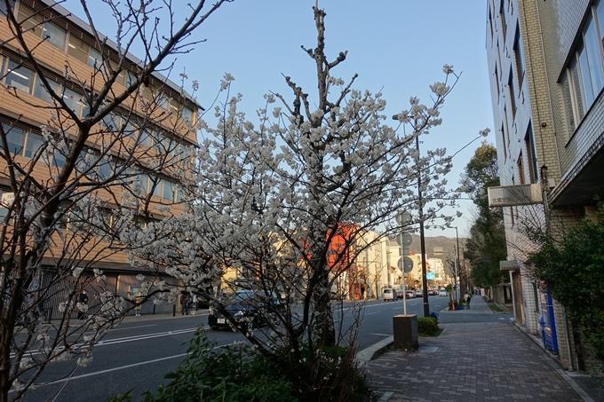 京都桜速報2018_02 No3