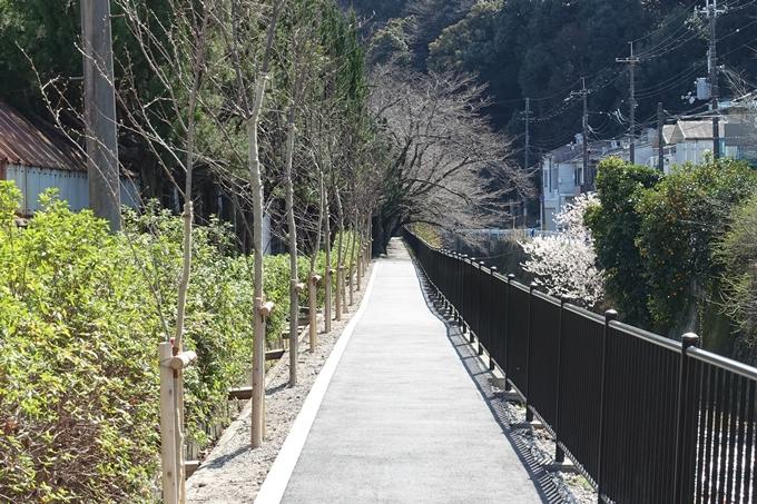 京都桜速報2018_01 No22