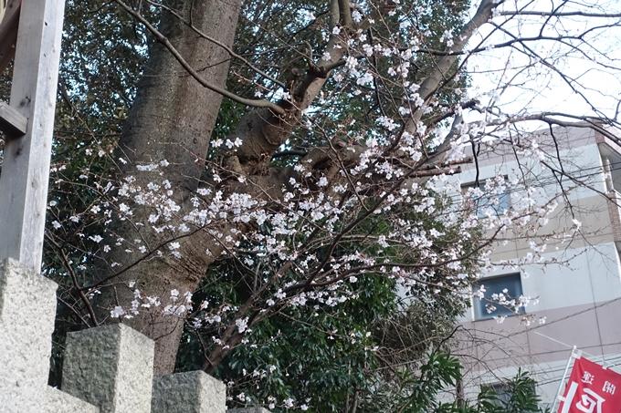 京都桜速報2018_01 No5