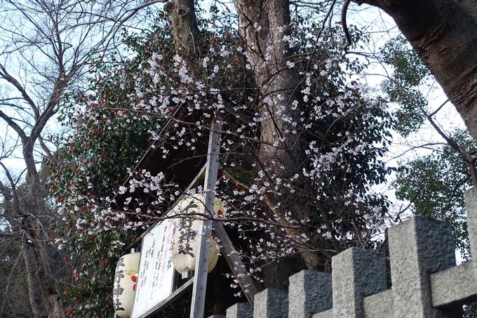 京都桜速報2018_01 No3