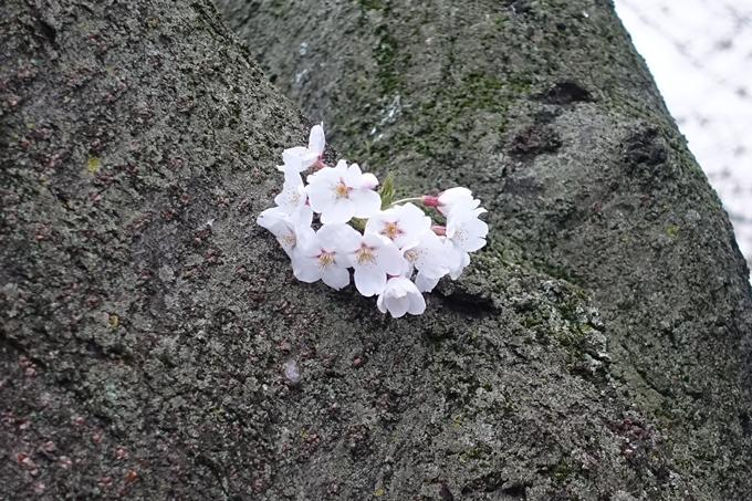 京都地方気象台 No6