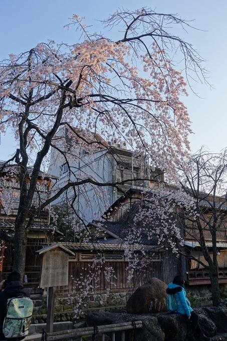 京都桜速報2018_03 No7