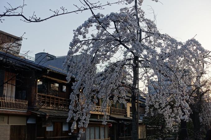 京都桜速報2018_03 No8