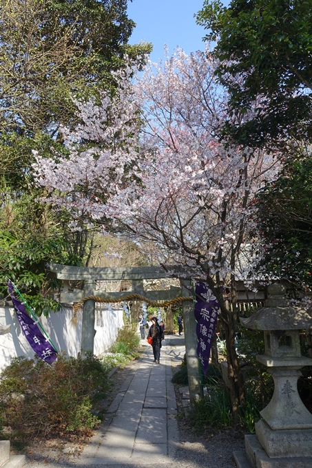 京都桜速報2018_04 No46