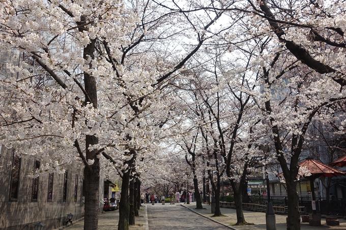 京都桜速報2018_05 No33