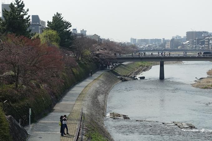 京都桜速報2018_05 No39
