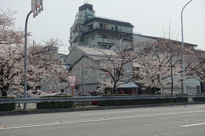 京都桜速報2018_05 No45
