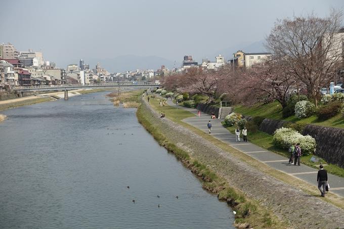京都桜速報2018_05 No48