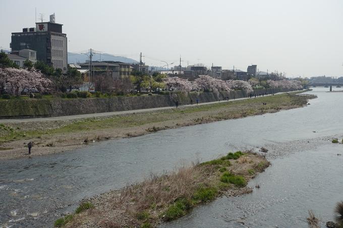 京都桜速報2018_05 No51