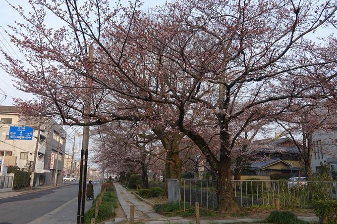 京都桜速報2018_06 No2