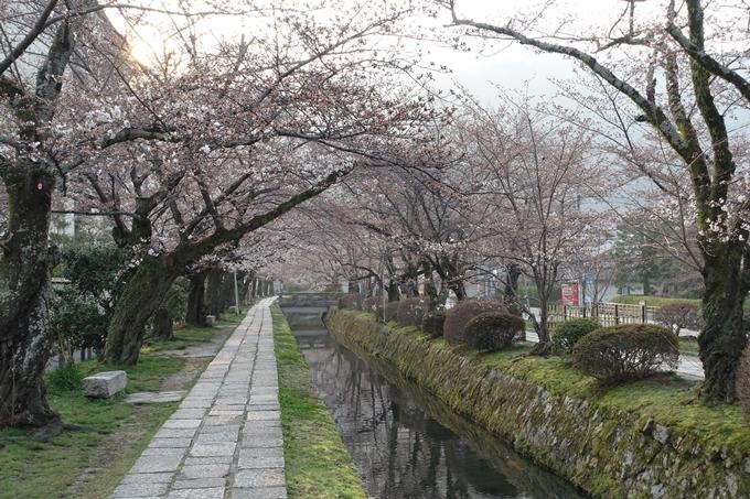 京都桜速報2018_06 No8