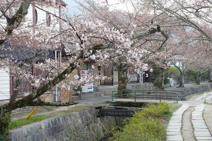 京都桜速報2018_06 No11
