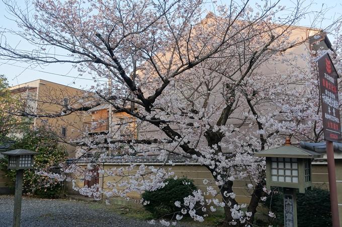 京都桜速報2018_07 No3