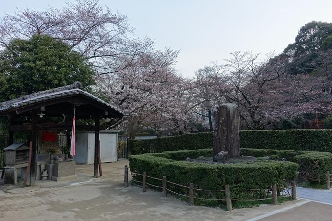 京都桜速報2018_08 No6