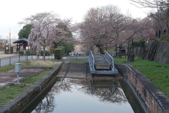 京都桜速報2018_08 No8
