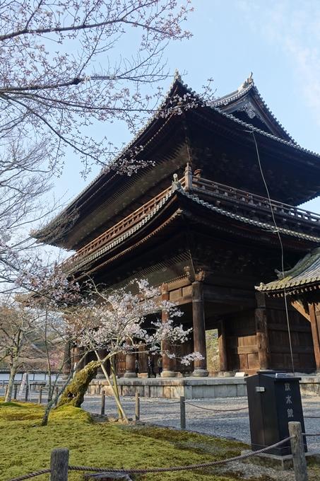 京都桜速報2018_08 No14