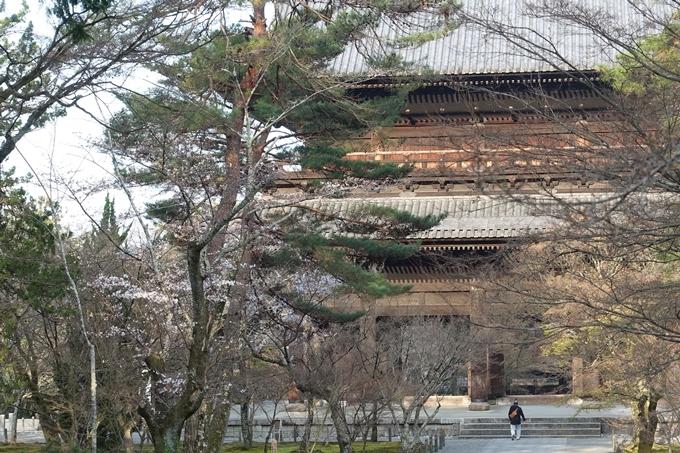 京都桜速報2018_08 No16