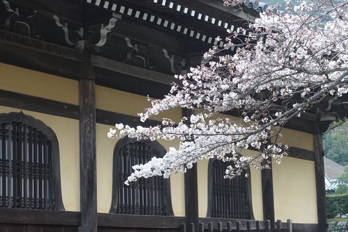 京都桜速報2018_08 No17