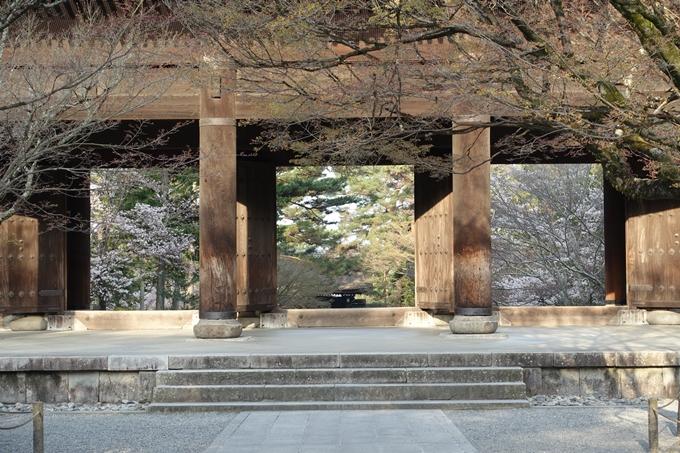 京都桜速報2018_08 No19