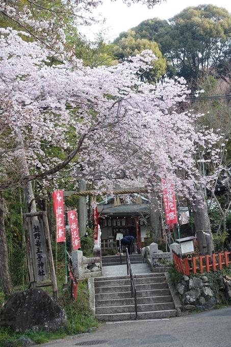 京都桜速報2018_08 No21