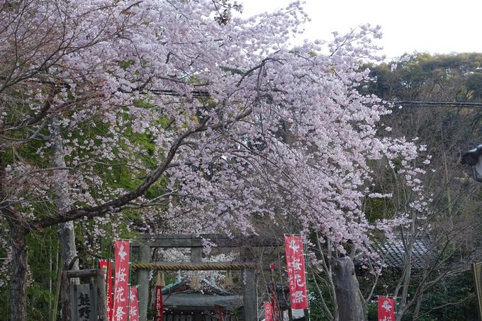京都桜速報2018_08 No22