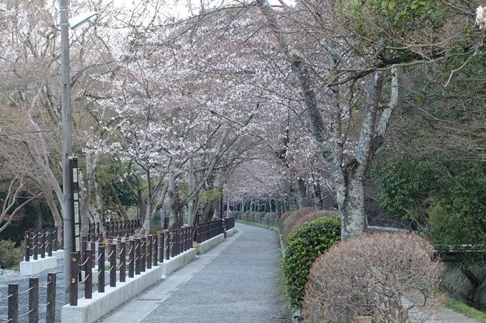 京都桜速報2018_08 No23