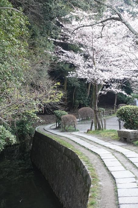 京都桜速報2018_08 No25