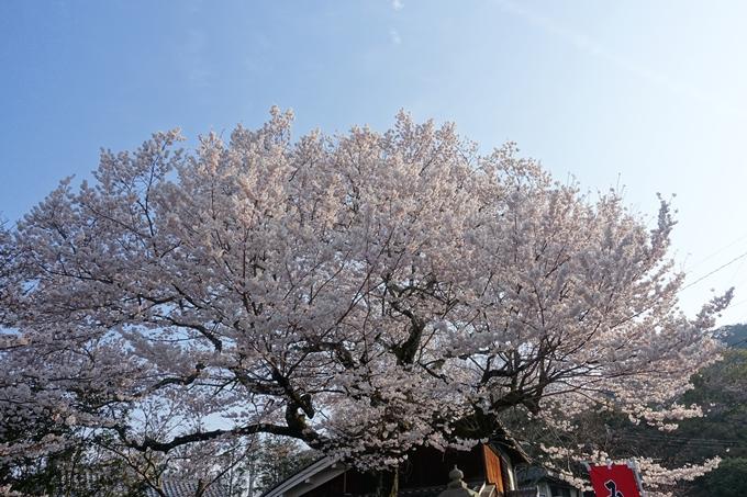 京都桜速報2018_08 No27