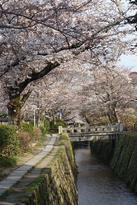 京都桜速報2018_08 No34