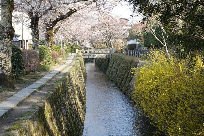 京都桜速報2018_08 No35