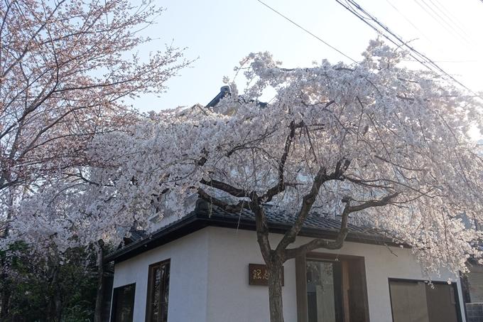 京都桜速報2018_08 No41