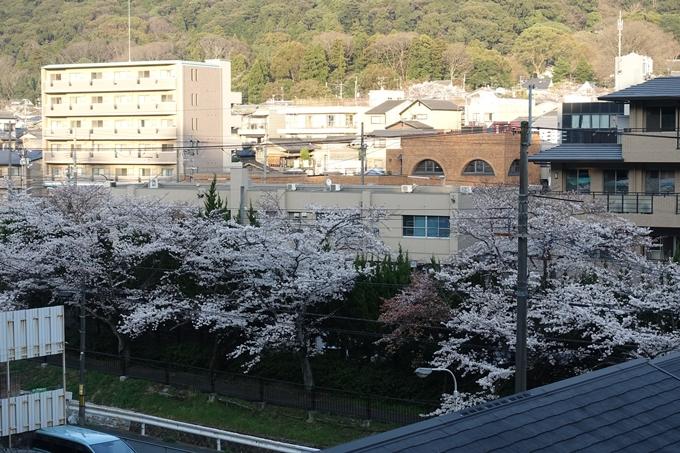 京都桜速報2018_09 No4