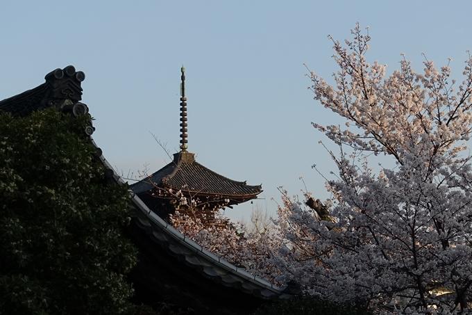 京都桜速報2018_09 No14