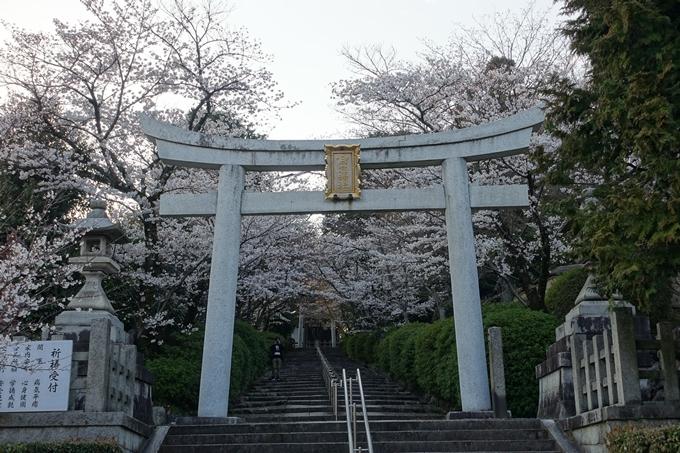 京都桜速報2018_09 No15