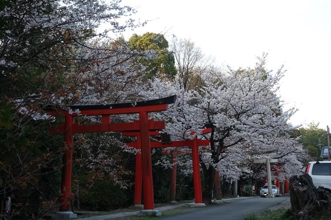 京都桜速報2018_09 No18