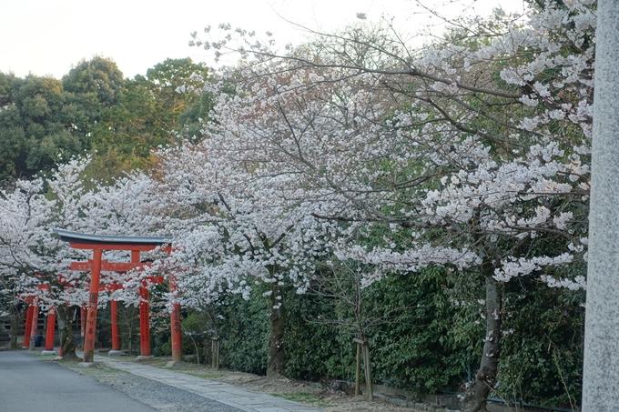 京都桜速報2018_09 No21