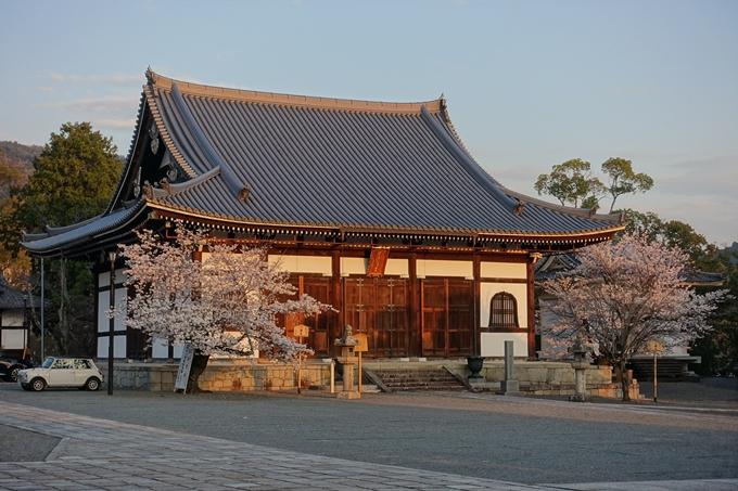 京都桜速報2018_09 No23