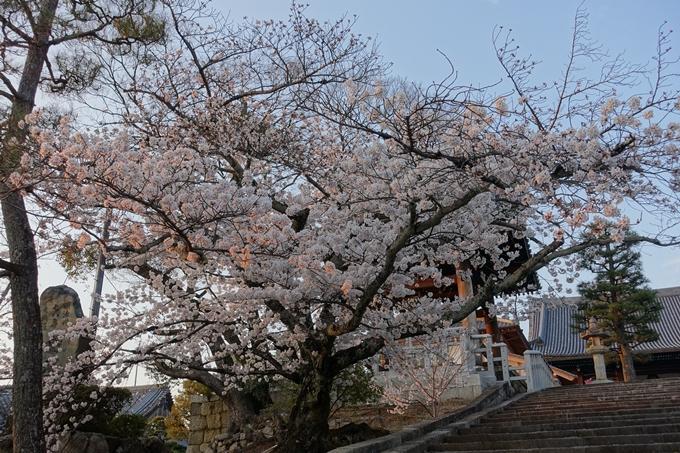 京都桜速報2018_09 No25