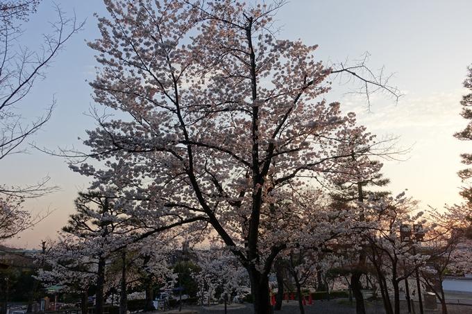 京都桜速報2018_09 No27